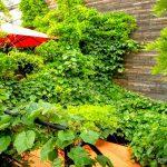 Végétation du patio